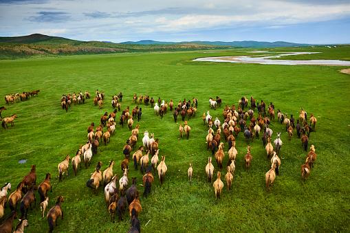 Horse「Mongolia, horse's herd, horserider」:スマホ壁紙(16)