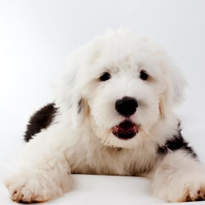 擬人化「子犬」:スマホ壁紙(0)