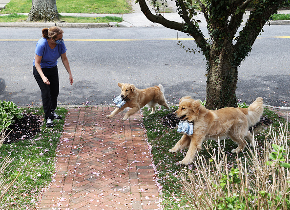 Grass Family「Long Island Brewery Uses Dogs To Help Deliver Beer To Customers」:写真・画像(1)[壁紙.com]