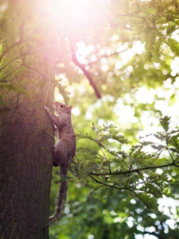 リス「A squirrel climbing a tree, with sun flare」:スマホ壁紙(3)