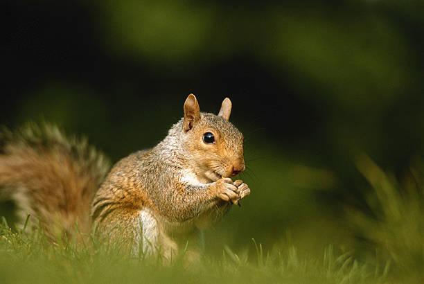 Squirrel, close-up, ground view:スマホ壁紙(壁紙.com)