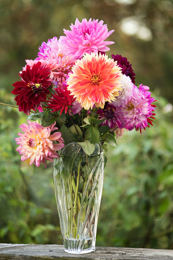 flower「Dahlia 'Punkin Spice' Flower Bouquet」:スマホ壁紙(8)