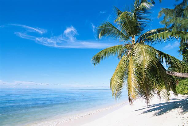 Palm tree on beach:スマホ壁紙(壁紙.com)