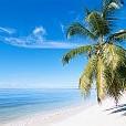 Palm壁紙の画像(壁紙.com)