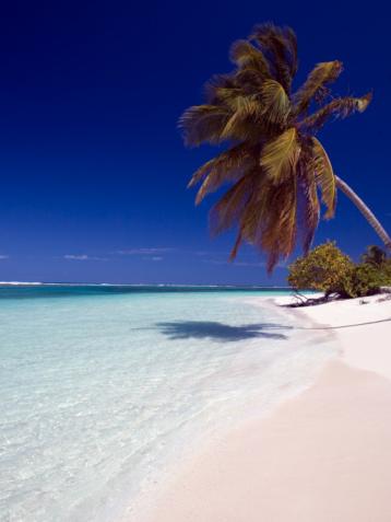 Virgin Islands「Palm tree on beach」:スマホ壁紙(8)