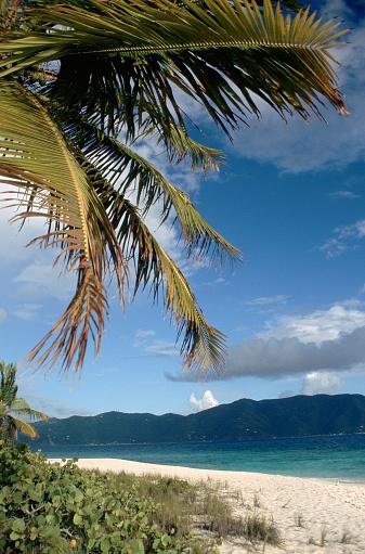 Sandy Cay「Palm Tree on Beach of Sandy Cay」:スマホ壁紙(9)