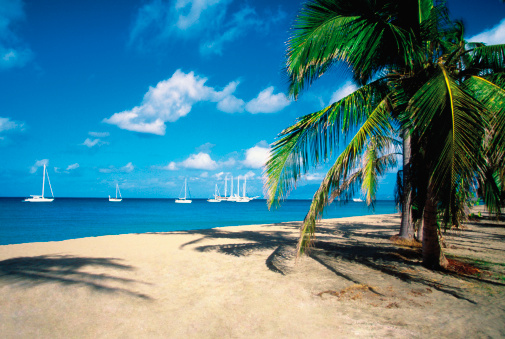 National Recreation Area「Palm tree on Pinneys Beach with sailboats in the distance on Nevis, Caribbean」:スマホ壁紙(10)