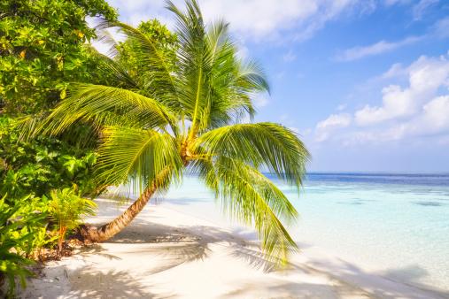 豪華 ビーチ「ヤシの木々、熱帯のビーチ」:スマホ壁紙(3)