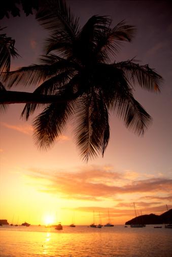 Grenadines「Palm tree on beach at sunset」:スマホ壁紙(14)
