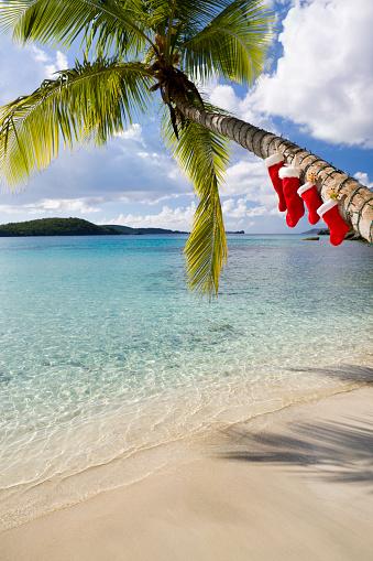 Christmas Lights「Christmas palm tree on a Caribbean beach」:スマホ壁紙(1)