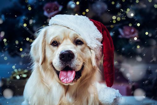 幸福「クリスマス」:スマホ壁紙(2)