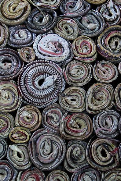 Stove「Inside Indonesia's Snake Slaughter House」:写真・画像(16)[壁紙.com]