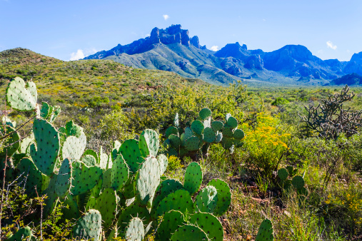 Prickly Pear Cactus「Prickly Pear cacti, Casa Grande Peak, Big Bend National Park」:スマホ壁紙(2)