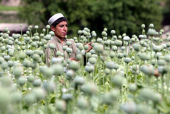 Bagram「Poppy Fields in the Tora Bora Region of Afghanistan」:写真・画像(16)[壁紙.com]