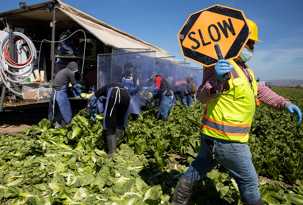 Romaine Lettuce「Immigrant Agricultural Workers Critical To U.S. Food Security Amid COVID-19 Outbreak」:写真・画像(9)[壁紙.com]