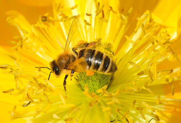 Environmental Conservation「May 20 Is World Bee Day」:写真・画像(9)[壁紙.com]