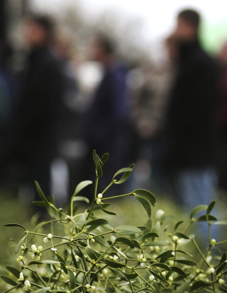 Magic Kingdom「Christmas Mistletoe Blessed In Druid Ceremony」:写真・画像(4)[壁紙.com]