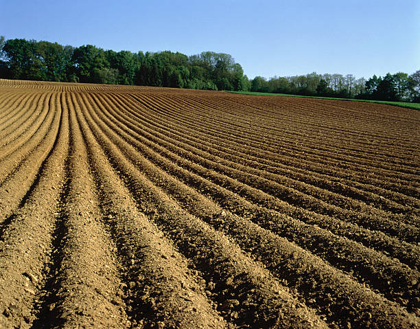 Ploughed field, Baden-Wuerttemberg, Germany:スマホ壁紙(壁紙.com)