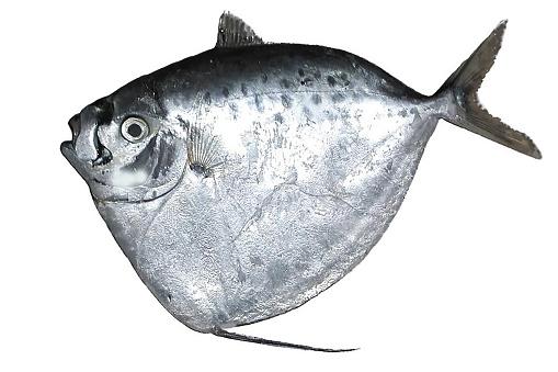 質感「moonfish」:スマホ壁紙(13)