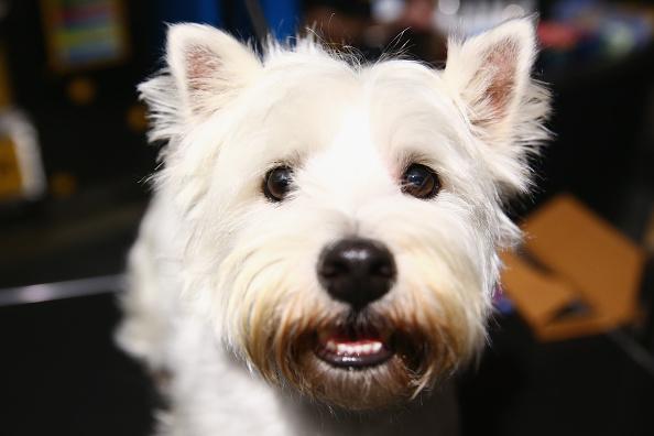 犬「Sydney Dog Lovers Show」:写真・画像(15)[壁紙.com]