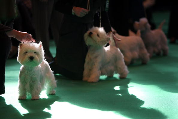 In A Row「Doors Open At Crufts 2009」:写真・画像(6)[壁紙.com]