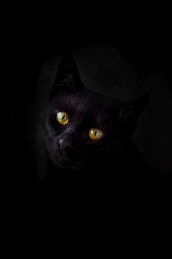 Iris - Eye「Face of black cat in front of black background」:スマホ壁紙(12)