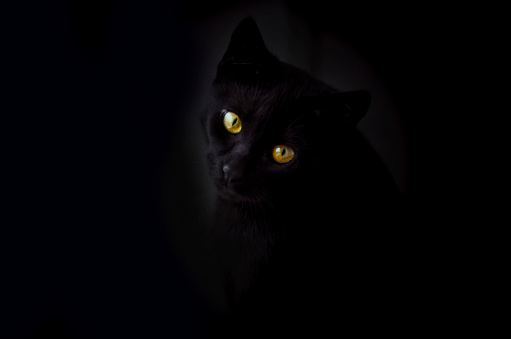 Animal Eye「Face of black cat in front of black background」:スマホ壁紙(15)