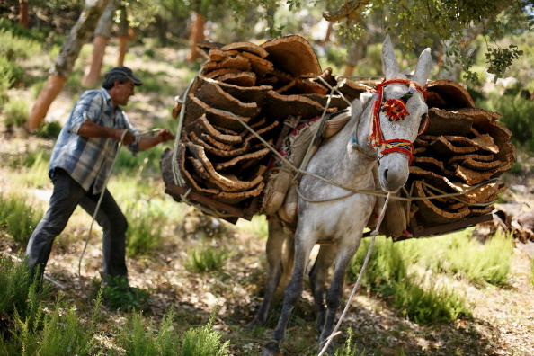 Plant Bark「Cork Harvest in Spain」:写真・画像(5)[壁紙.com]