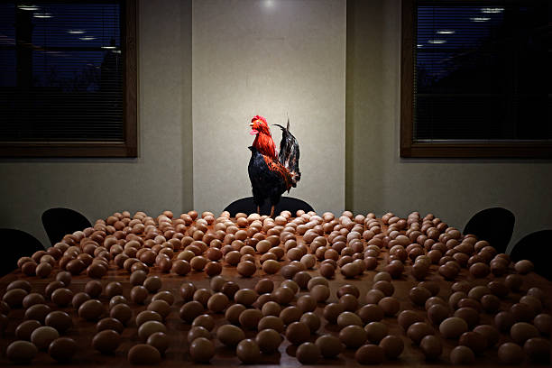 rooster at the head of boardroom table full of egg:スマホ壁紙(壁紙.com)