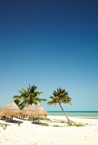 Gulf of Mexico「Thatched roof umbrellas on tropical beach」:スマホ壁紙(13)