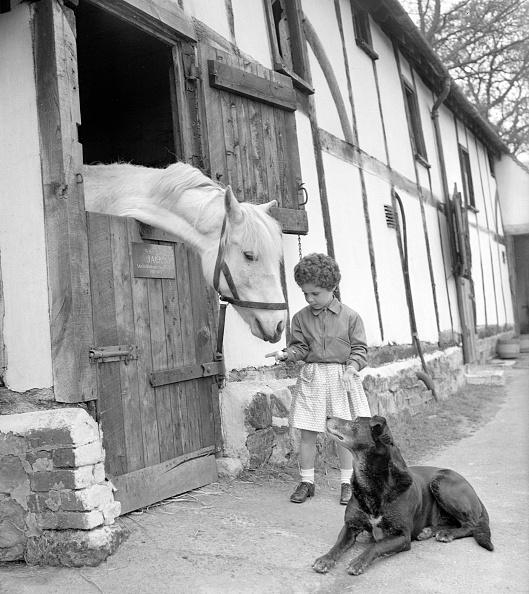 Animal Themes「Feeding The Pony」:写真・画像(1)[壁紙.com]