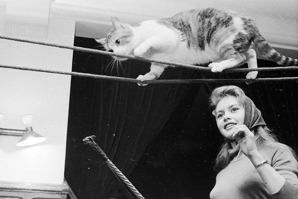 Animal Themes「Balance For Brigitte」:写真・画像(7)[壁紙.com]