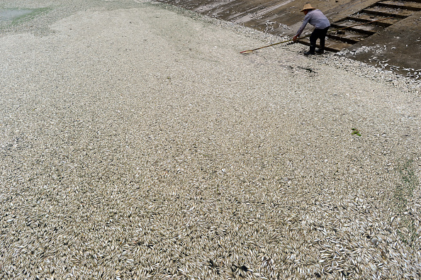 Pollution「Pollution Kills Thousands Of Fish In Wuhan」:写真・画像(18)[壁紙.com]