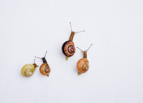 snails「snail racing」:スマホ壁紙(14)