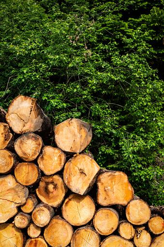 Woodpile「stacked Lumber and tree」:スマホ壁紙(10)