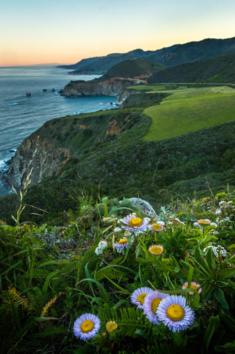 Big Sur「Sea Daises at Hurricane Point」:スマホ壁紙(16)