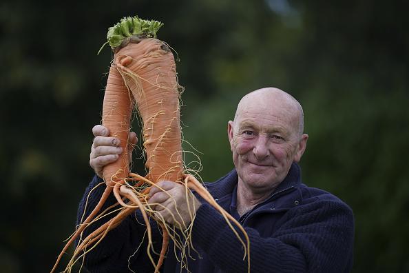 Carrot「Giant Vegetables At Harrogate Autumn Show」:写真・画像(18)[壁紙.com]