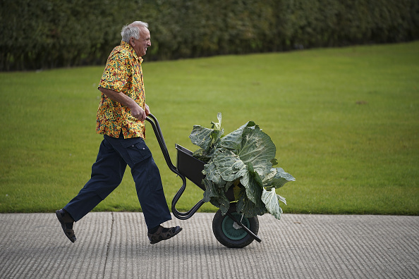 flower「Giant Vegetables At Harrogate Autumn Show」:写真・画像(8)[壁紙.com]