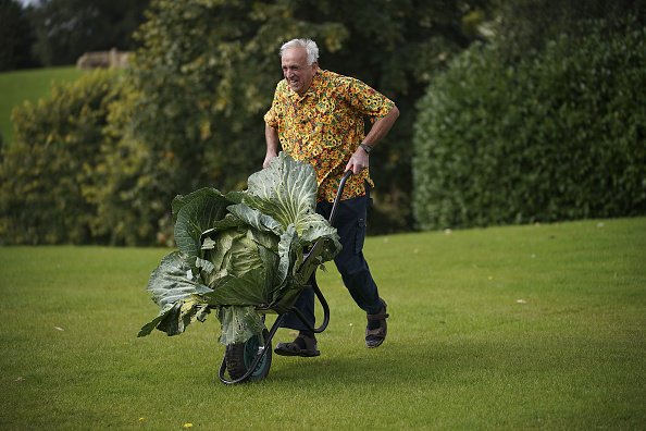 flower「Giant Vegetables At Harrogate Autumn Show」:写真・画像(10)[壁紙.com]