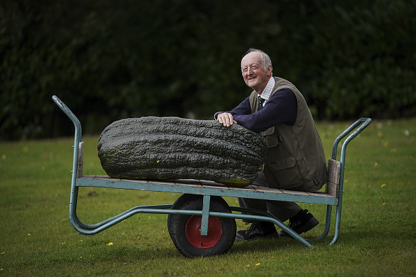 Vegetable「Giant Vegetables At Harrogate Autumn Show」:写真・画像(9)[壁紙.com]