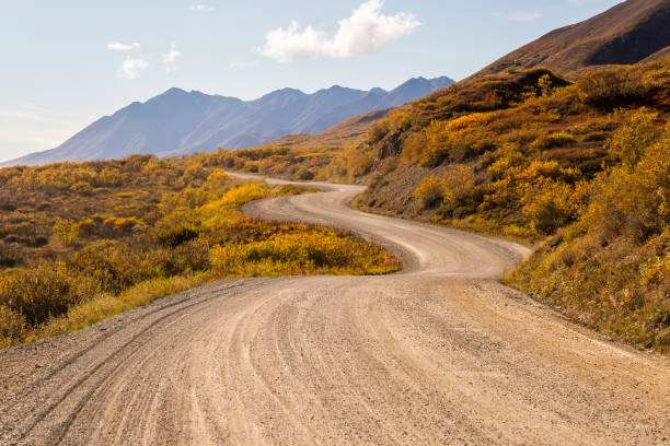 Winding dirt road, Denali National Park, Alaska, USA:スマホ壁紙(壁紙.com)