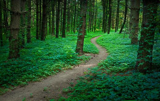 一本道「ミステリアスな森林」:スマホ壁紙(10)