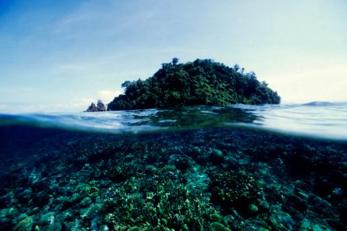熱帯魚「リーフと島」:スマホ壁紙(6)