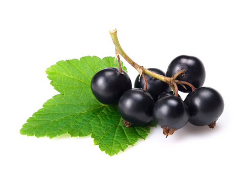 Currant「black currants w clipping path」:スマホ壁紙(18)