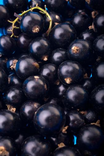カシス「Black currant」:スマホ壁紙(16)