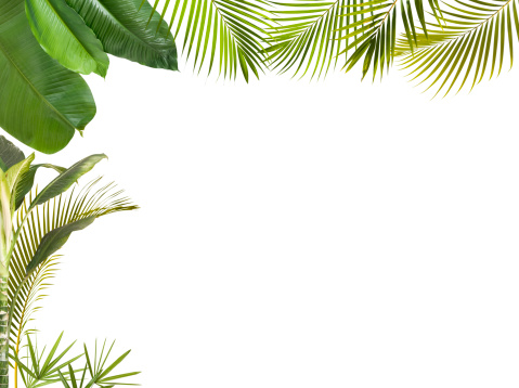 Branch - Plant Part「Tropical leaves frame isolated on white with copy space」:スマホ壁紙(10)