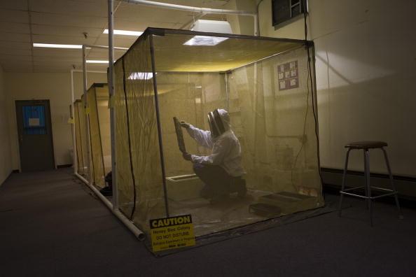Rick Scibelli「Los Alamos Laboratory Trains Bees To Detect Explosives」:写真・画像(14)[壁紙.com]