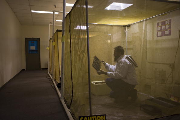 Rick Scibelli「Los Alamos Laboratory Trains Bees To Detect Explosives」:写真・画像(9)[壁紙.com]