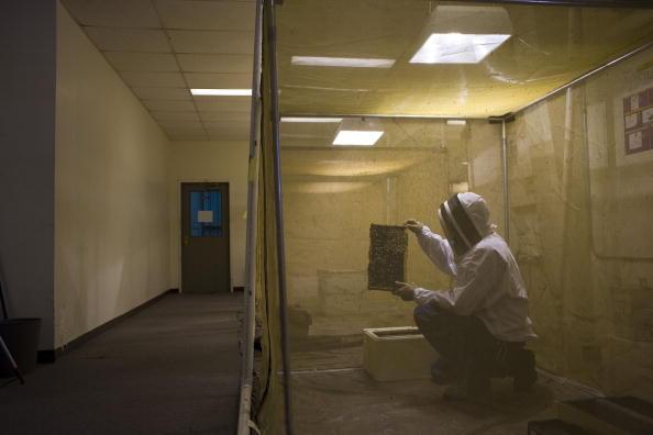 Rick Scibelli「Los Alamos Laboratory Trains Bees To Detect Explosives」:写真・画像(18)[壁紙.com]