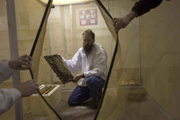Rick Scibelli「Los Alamos Laboratory Trains Bees To Detect Explosives」:写真・画像(8)[壁紙.com]